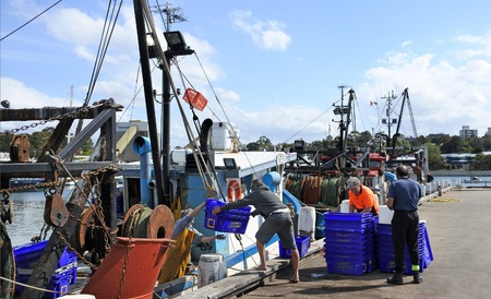 million fish: Sydney, Australia - OCT 20 2016:Australian fishermen unloading seafood in Sydney Fish Market wharf. The Australia fishing industry is important sector that contributed $25,000 million to Australias GDP in 2008.