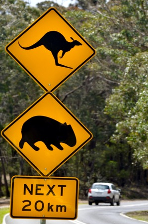 trip hazard sign: Sydney, Australia - OCT 23 2016:Car pass a warning road sign to beware of Kangaroo and Wombat. Hundreds of thousands of wild animals are killed each year after being hit by motor vehicles on Australian roads. Editorial
