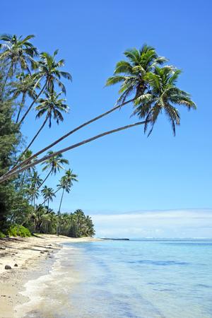Landscape view of Coconut palm trees on Titikaveka beach in Rarotonga, Cook Islands. Reklamní fotografie