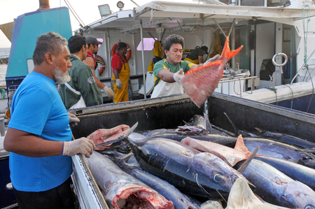 RAROTONGA - DEC 12 2017:Cook Islanders fishermen unloading their catch in Ports of Avatiu. Cook Islands exclusive economic zone territorial waters stretches for nearly 2 million square km (772,395 sq) 報道画像