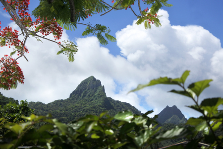 Landscape view of Te Manga, at 2142 feet (653 meter) , it is the highest point in Rarotonga and all the Cook Islands. Stock Photo