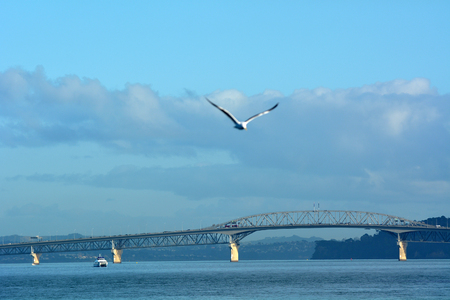 Sea gull fly over Auckland harbour bridge in Auckland as view from a ferry over , New Zealand. Stock Photo