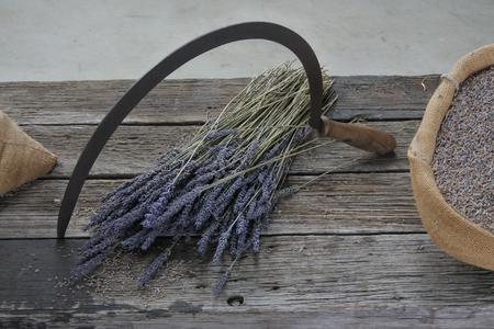 Sichel- und Lavendelblüten in Tasmanien, Australien.