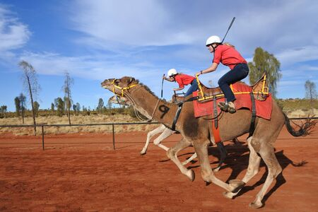 Yulara, Northern Territory, Australia - May 16 2019: Camel racing in Uluru. The first camel imported to Australia in 1840 to work in the semi-arid regions of Australia since then, camel racing has become a very popular sport.