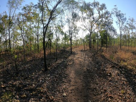 Landscape view of footpath in Litchfield National Park in the Northern Territory of Australia