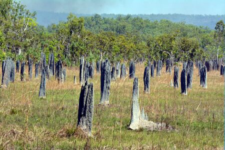 Magnetic Termite Mounds in Litchfield National Park in the Northern Territory of Australia