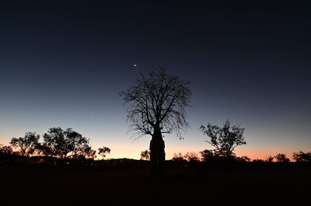Dramatic sky sunset over a Boab tree silhouette Kimberley Western Australia.