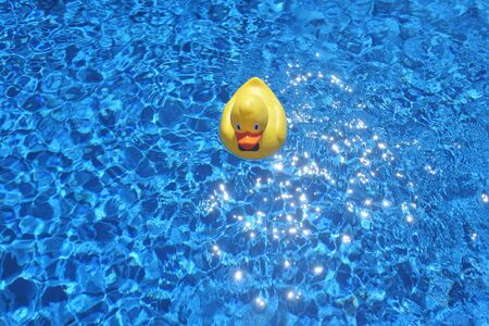 Above view of a Yellow Duck in a swimming pool. No People. Copy space