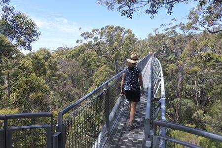 Tourist walking on Valley of the Giants Tree Top Walk among the tallest and oldest living trees in the world the Western Australia's majestic Tingle trees in Western Australia
