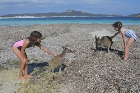 Young Australian girl playing with Kangaroos in Lucky Bay in Cape le grand in Western Australia 免版税图像