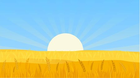 Landscape Background Vector Illustration of a Wheat Field at Sunset