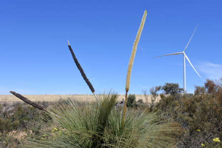 Large wind power kinetic energy converter turbine rotating in the field near Cervantes in Western Australia.