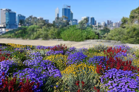 Colorful wildflowers blooming at Kings Park and Botanic Garden in Perth Western Australia.