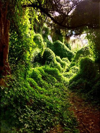 Tropical rain forest secret garden landscape. Stock fotó