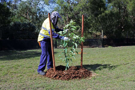 An unrecognizable city landscaper worker planting a new tree in a public park. Stock fotó