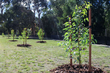 Group of new trees planted in a public park.Environment concept. No people. Copy space