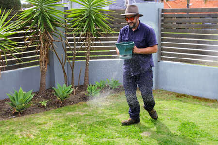 Australian gardener spreading fertilizer on grass lawn on home front and back yard garden.