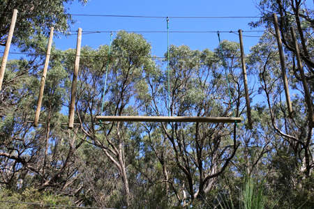 An empty tree climbing ropes course obstacles connected to high eucalyptus trees canopy.No people. Copy space Banque d'images