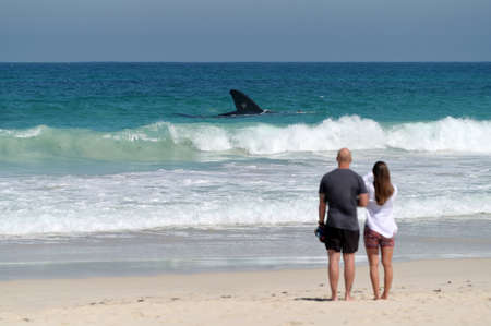 PERTH,WA-SEP 23 2021:Australian couple standing on a beach looking at a large female Humpback whale swimming along the coast.Humpbacks migrate annually from the poles to warmer waters near the Equator