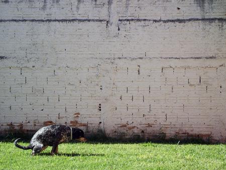 개 흰색 음영 된 벽에 잔디에 쪼 그리고 앉는 개