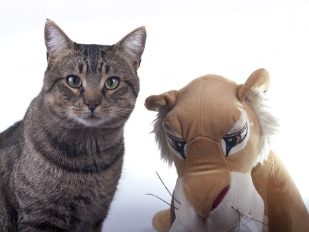 two cats photo