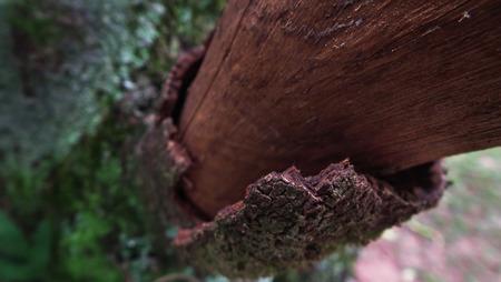s 木の幹の樹皮を流してのクローズ アップ