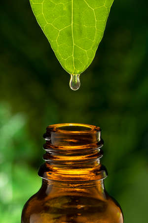 OIL DROP FALLING FROM A GREEN LEAF TO A BROWN GLASS JAR. HOMEOPATHIC AND HERBAL PRODUCTS. CONCEPT OF TRADITIONAL AND NATURAL MEDICINE. Foto de archivo