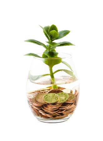 Euro coins and green plant growing in glass of water photo