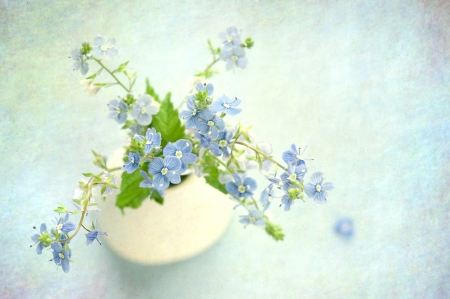 forget me not: Blue flowers in flowerpot on grunge abstract background  Stock Photo