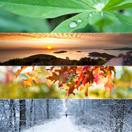 Four seasons concept with leaves, sunset view, autumn leaves and winter landscape Standard-Bild