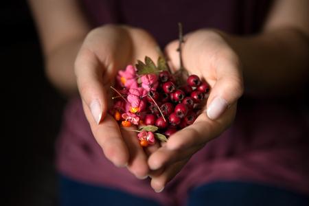 De jonge vrouw houdt rode wilde rozenbottels in hart-vormige handen