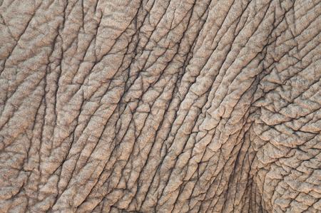 zoologico: Cierre de la imagen de un fondo de textura de la piel de elefante