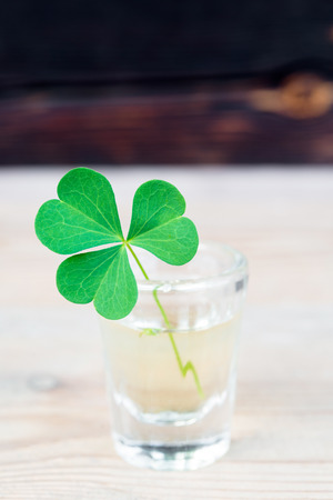 Close-up of shamrock in small drinking glass on wooden table with copy space 版權商用圖片