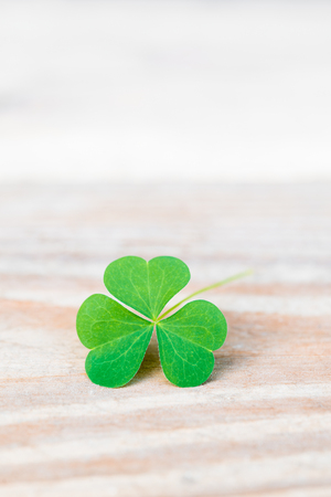 Close-up of three leaves shamrock on wooden table with copy space 版權商用圖片