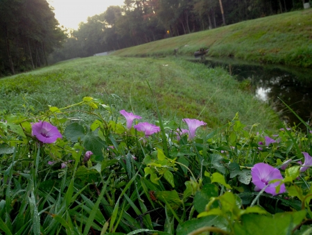 arroyo: Amanecer en un arroyo