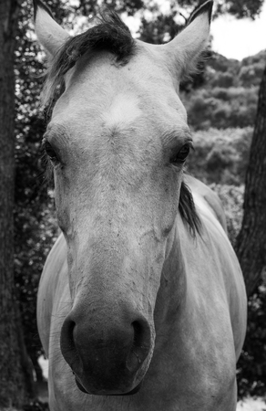 The sweet look of the horse