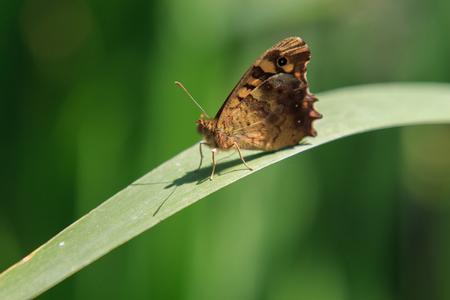 La mariposa esperando que se haga la foto Foto de archivo