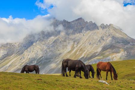 Horse.Route a través de los maravillosos lugares de los Picos de Europa