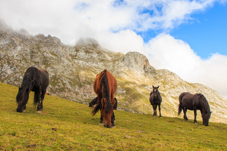 Horse.Route through the wonderful places of the Picos de Europa