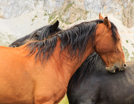 Horses.Route through the wonderful places of the Picos de Europa