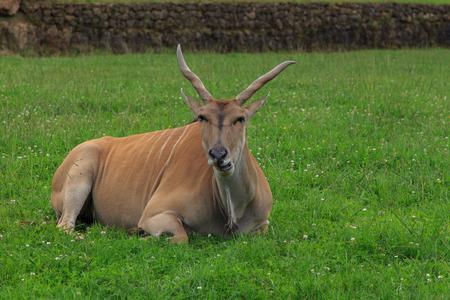 Elando. Animales del Parque Natural