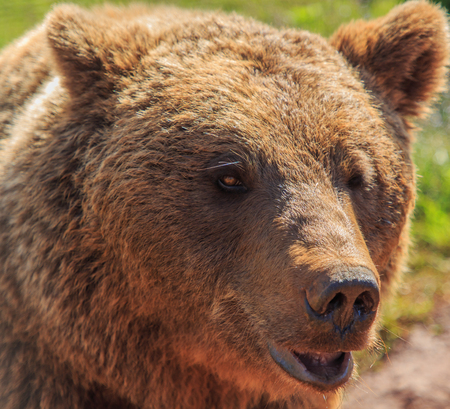 Bear. Animals of the Nature Park of Cabárceno Stock Photo