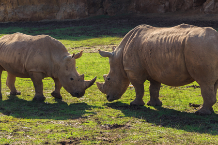 Rinoceronte. Animales del Parque Natural de Cabárceno