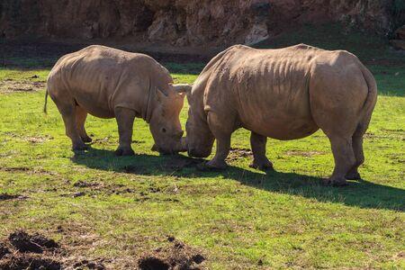 Rhino. Animals of the Nature Park of Cabárceno
