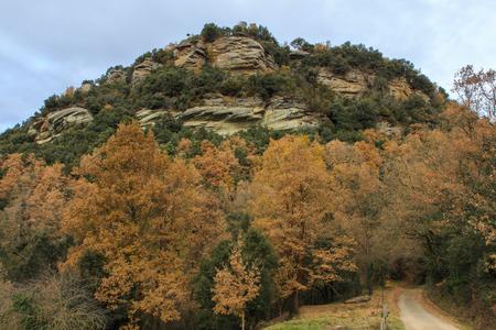 The diversity of colors at the end of Autumn Foto de archivo