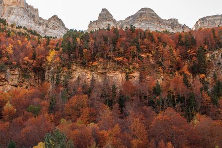 The Autumn in the Ordesa Valley (Ordesa National Park - Monte Perdido) Foto de archivo - 113992123