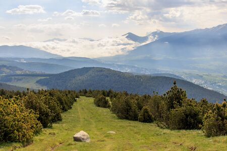 The spruce corridor on the green mountain with clouds in the background Foto de archivo