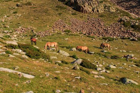 Brown horse with long hair on the mountain. Animals concept Imagens