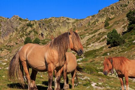 Brown horse with long hair on the mountain. Animals concept Foto de archivo