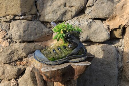 Mountain boot with green plants.Objects and plants concept